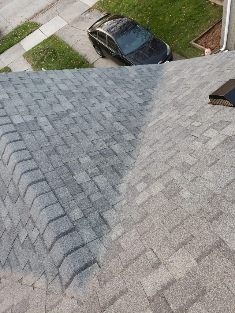 Royal Oak Roof